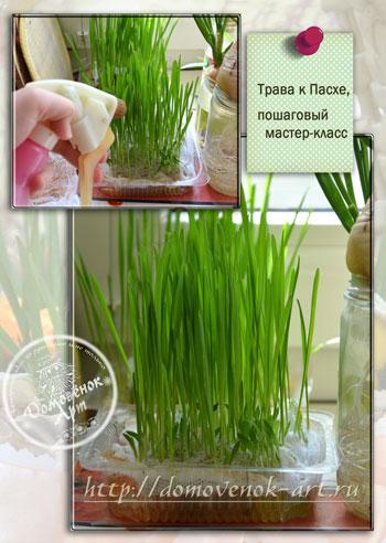 как вырастить траву к Пасхе