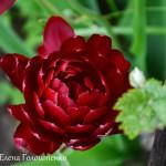 cvetok-neser-1