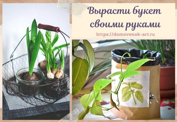 Подарок на 8 марта: набор для выращивания