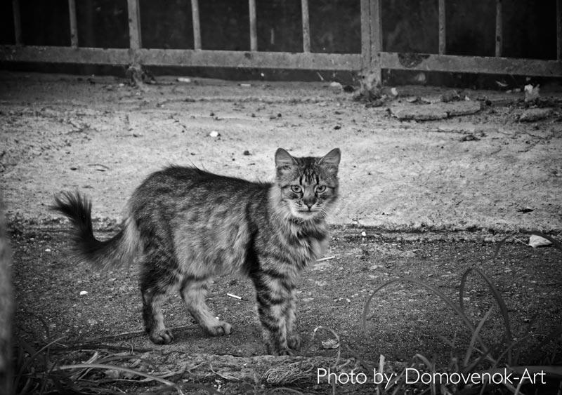 Городские коты. Галерея