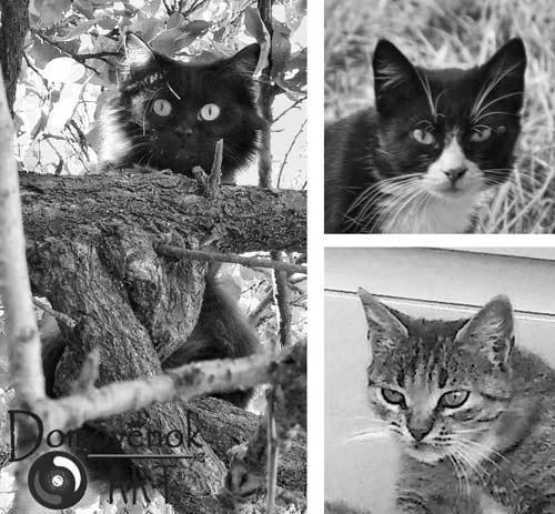 Чему чат людей коты