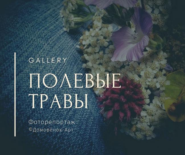Полевые травы и цветы