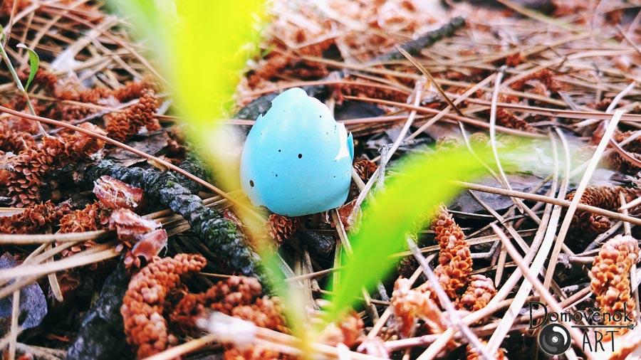 Яйцо певчего дрозда